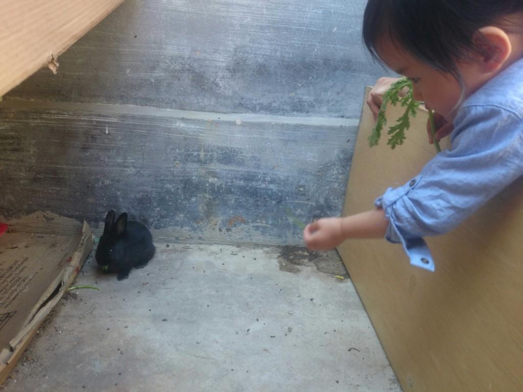 大叔不知道在哪里弄了几头小兔兔,小客人也来咯,小兔几,你倒是给摄影个正脸啊。。。不给算了,长得这么黑反正看不清