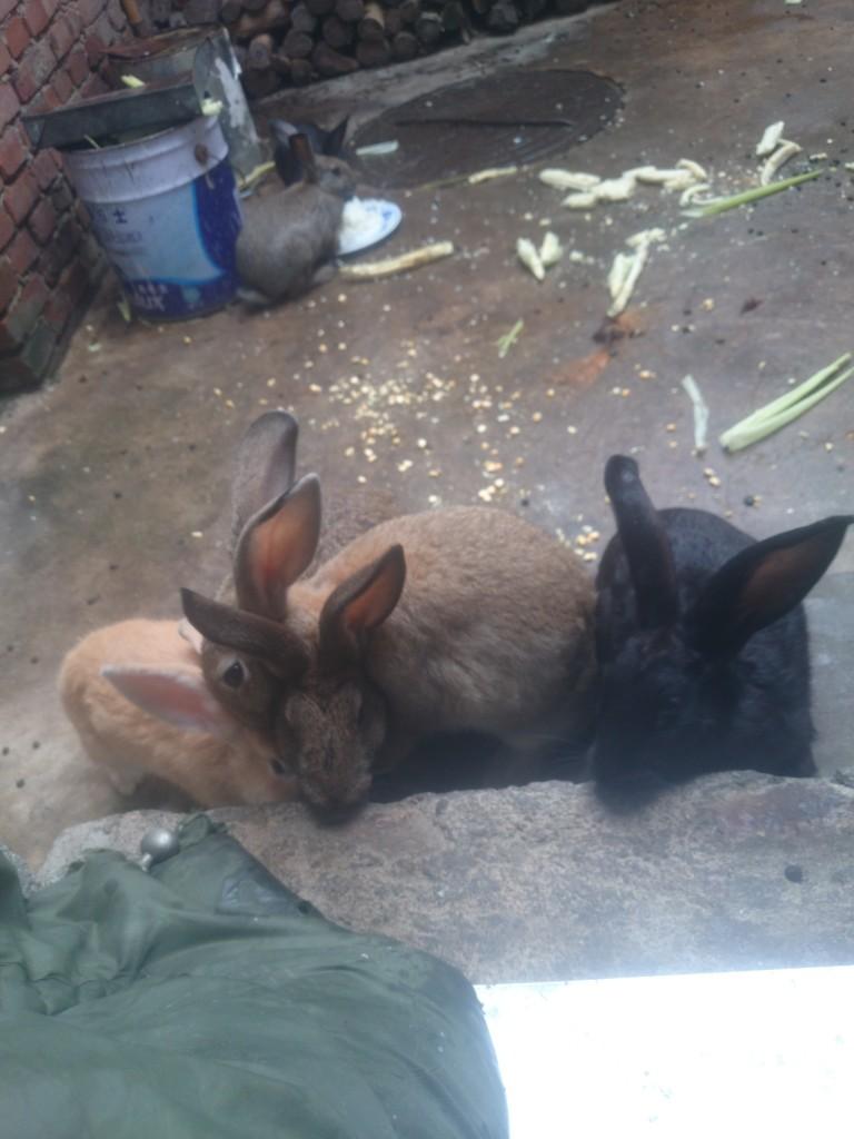 要回家了,小兔兔886